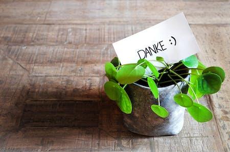 Umpan Balik Positif dan Umpan Balik Negatif
