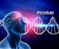5 Mitos Otak Kanan dan Otak Kiri